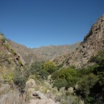 Cafayate, Valles Calchaquíes (Prov. Salta, ARG)