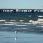 Muelle Puerto Madryn (Prov. Chubut, ARG)