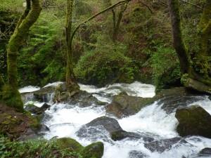 Eume river_III