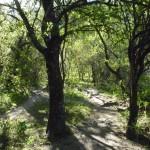 Subida Cascada Hornillos, Dique de la Quebrada (Prov. Córdoba, ARG)